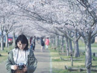 女性,風景,春,桜,屋外,サクラ,樹木,お花見,人,ジャケット,おはなみ,さくら