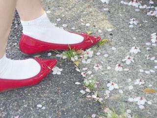 女性,桜,屋外,赤,サンダル,お花,サクラ,お花見,人,可愛い,地面,赤色,さくら,履物,おはな
