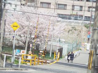 花,春,桜,屋外,電車,道路,線路,桜並木,サクラ,樹木,お花見,都会,青春,通り,制服,さくら
