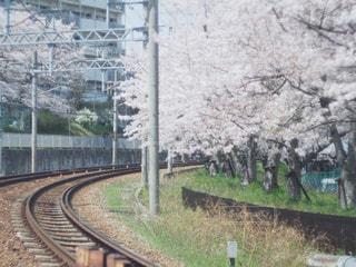 春,桜,屋外,線路,桜並木,草,樹木,旅行,トラック,鉄道,さくら,ブロッサム