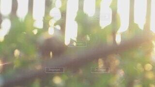 犬,猫,自然,風景,空,花,夏,夕日,動物,庭,屋外,かわいい,雲,夕方,景色,お花,光,家,ねこ,ペット,紫陽花,いぬ,子猫,仔猫,外,あくび,眩しい,風,昼,幸せ,柴犬,平和,夕陽,しっぽ,cat,実家,洗濯物,どうぶつ,猫派,ネコ,アジサイ,動画,こねこ,揺れる,ムービー,ネコ派