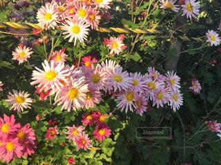 黄色の花の束の写真・画像素材[852309]