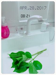 ピンク,新緑,洗面所,新しい,洗面台,水切り,洗面所  洗面台 新しい,庭の紫陽花  水切り