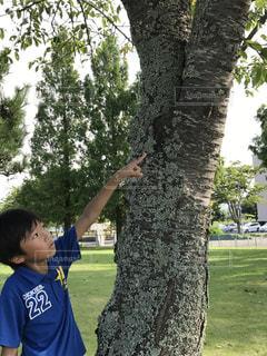公園,夏,発見,蝉,見つけた,指さし,ハンドサイン,見て見て