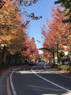 紅葉の並木道の写真・画像素材[881244]