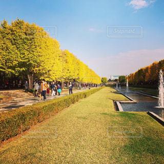 秋のイチョウ並木の写真・画像素材[1634946]