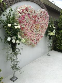 近くの花のアップ - No.786132
