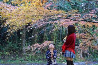 木の隣に立っている女の子の写真・画像素材[785108]