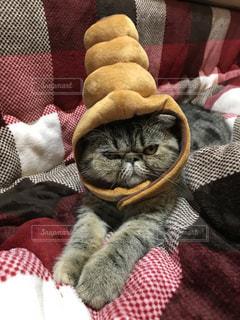 毛布の上に横になっている猫の写真・画像素材[940093]