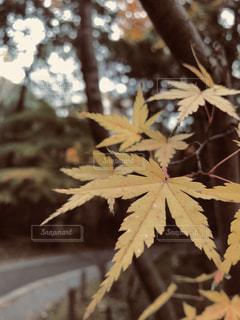 近くの木のアップの写真・画像素材[894950]