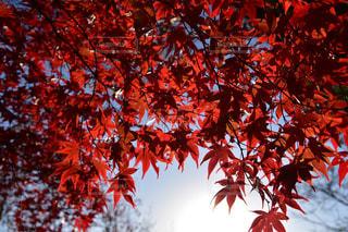 近くの木のアップの写真・画像素材[785468]