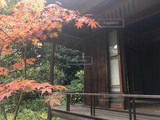 秋の茶室の写真・画像素材[795308]