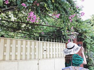木製のフェンスの上に乗って男の写真・画像素材[953719]