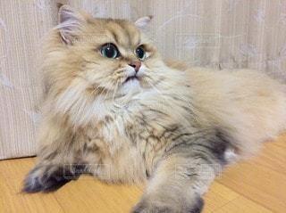 猫 - No.23631