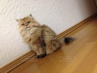 猫 - No.23708