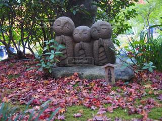 庭に座っているテディー ・ ベアの写真・画像素材[841974]