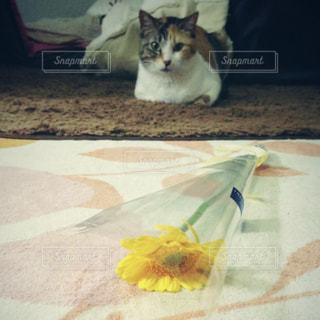 テーブルの上に横になっている猫の写真・画像素材[1885015]