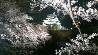 大阪城の夜の写真・画像素材[1022801]