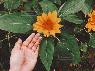 花を持っている手の写真・画像素材[1367978]