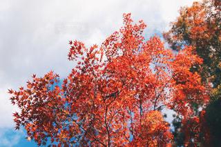 近くの木のアップの写真・画像素材[875137]
