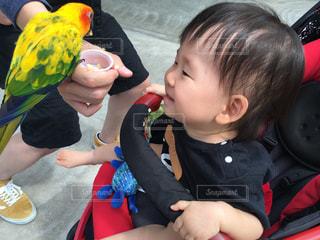 子ども,鳥,掛川花鳥園,PassMe