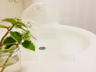 白,癒し,シンプル,朝,植物のある暮らし,グリーン,洗面所,洗面台,清潔,緑のある暮らし,プレクトランサス