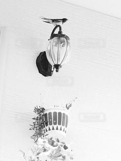 空を飛んでいる鳥の写真・画像素材[826043]