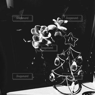 ツリーの写真・画像素材[826128]