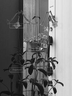 テーブルの上の花の花瓶 - No.826204