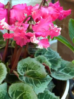 近くの花のアップ - No.843283