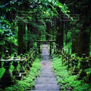 熊本,熊本上色見熊野座神社