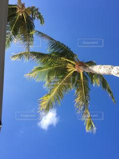 ヤシの木の写真・画像素材[797604]