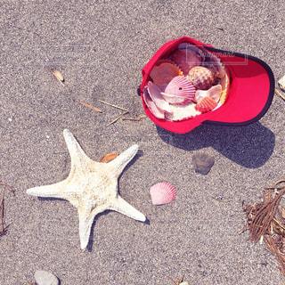 夏の思い出の写真・画像素材[817211]