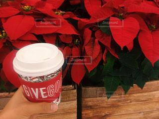 ポインセチアとクリスマススターバックス - No.872849
