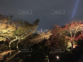 夜空の花火の写真・画像素材[864108]
