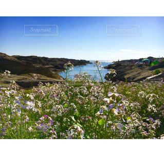 花と海と静けさとの写真・画像素材[798648]