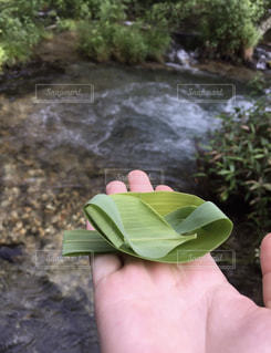 草舟🌱の写真・画像素材[798770]
