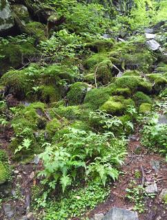 緑豊かな大自然の写真・画像素材[798776]