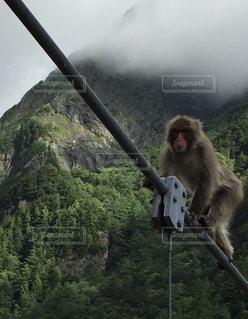 橋を渡る猿🐵の写真・画像素材[798807]