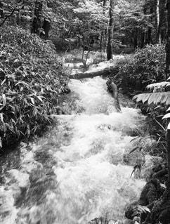 川の流れの写真・画像素材[820496]