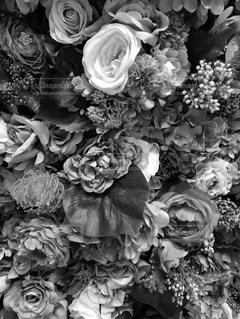 モノクロの花の写真・画像素材[820500]
