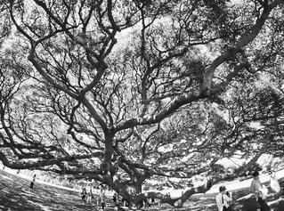 この木なんの木の写真・画像素材[821078]