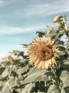 夏の終わりの写真・画像素材[1397797]
