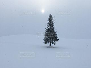 雪に覆われた斜面の写真・画像素材[901514]