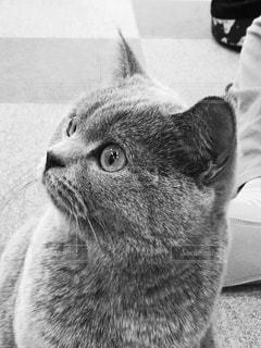 猫の写真・画像素材[815526]