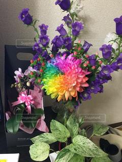 レインボー 菊の写真・画像素材[1136019]