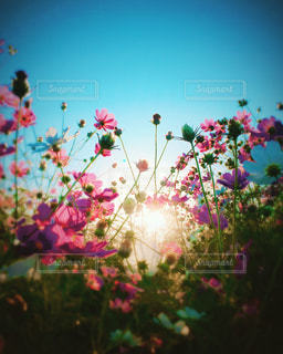色とりどりの花の花瓶の写真・画像素材[807311]