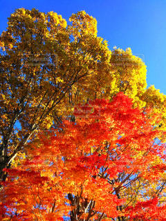秋晴れの写真・画像素材[841401]