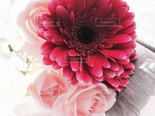 花束の写真・画像素材[847630]