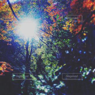 ある日森の中での写真・画像素材[871562]